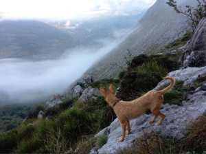Chase the dog checks out the view as we climb out of the mist..